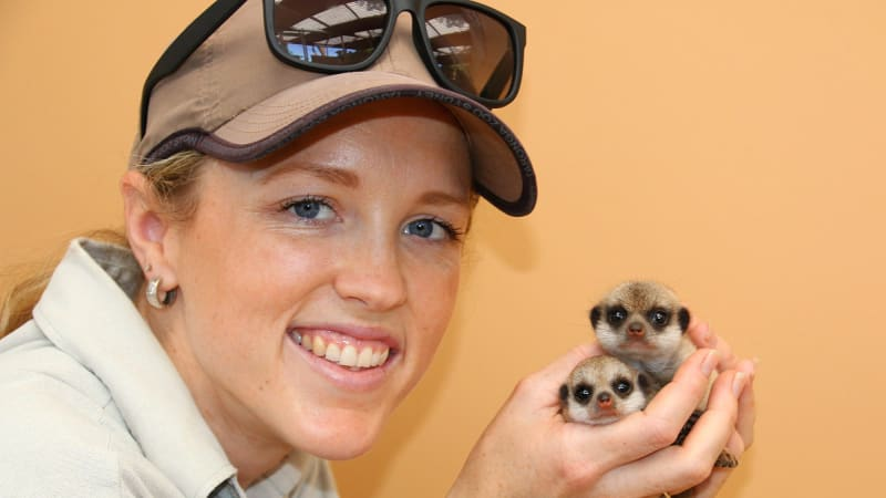 Small Exhibition Stand Up Comedy : Meerkat pups stand up for their species