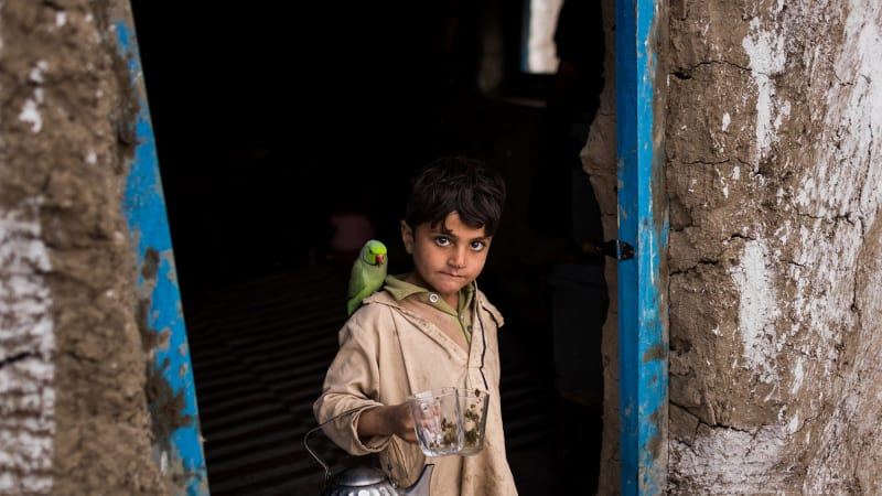 With just his parrot, an Afghan boy takes the hard road back