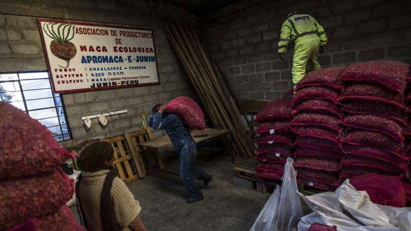 Vegetable spawns larceny and luxury in Peru