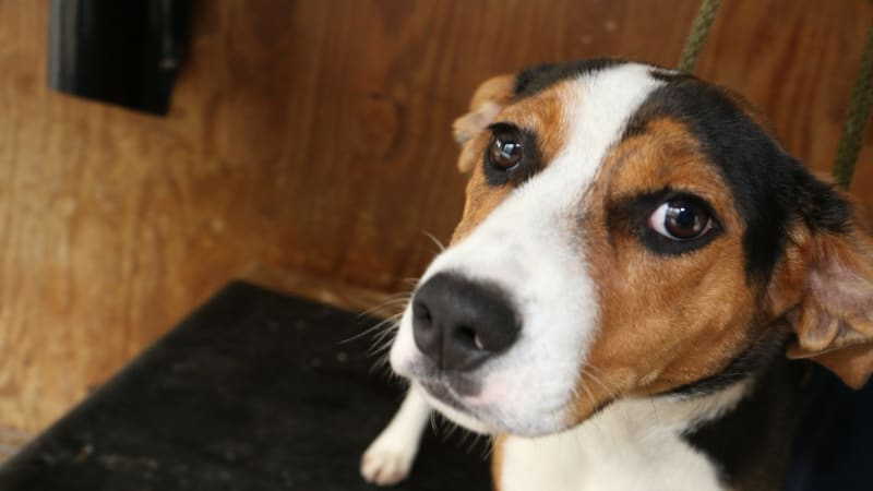 Your dog can read your face, researchers find