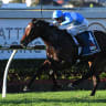 Trainer sets sights on Everest after Prompt Response bags group 1