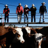 Semen auction to help fund farmers' fight against new Queensland laws