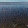 Concerns for Lake Cowal