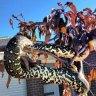 Missing snake a slippery issue for Bonner residents