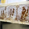 Sweet as: The rise and rise of West Australian honey
