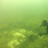 Seagrass graveyard: swathes of marine meadows still devastated in Shark Bay 10 years on