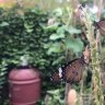 Water creeps close, butterflies escape as cyclone bears down.