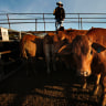 750 workers out of a job as two Ipswich meatworks shut
