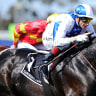 Visiting Euopean stayers won't be venturing to Geelong