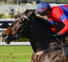 Why it could be second time lucky for star mare on first Tuesday in November