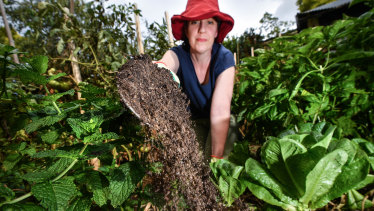 Associate Professor Suzie Reichman's research found one in five veggie patches in Melbourne have levels of lead that exceed health warnings.