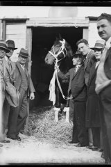 Racehorse Winooka standing in a doorway flanked by eight men prior to departure for America, New South Wales, 8 May 1933,