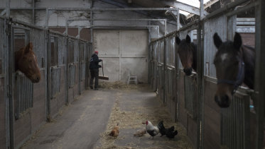 A worker cleans a horse stable during an inspection by the animal police in The Hague.