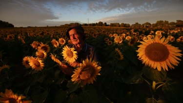 Max Winter has a bumper 16ha crop of sunflowers.