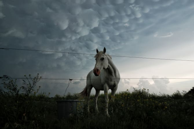 A mammatus cloud forms behind a horse in Nebraska – the cloud's bulbous shapes are formed by strong downdrafts.
