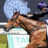 Why Mark Newnham turned down a deal to run in The Everest with Big Parade