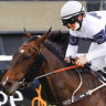 Race-by-race preview and tips for Newcastle on Friday