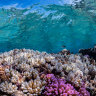 'Buying time for the Reef': $300m earmarked for novel coral research