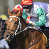 Waller's next wave of stayers on show as old-timers chase McKell Cup