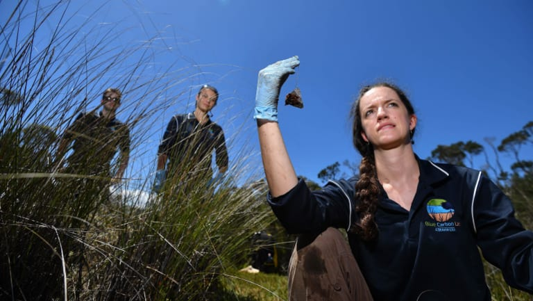 Dr Stacey Trevathan-Tackett, Nicolas hebert and Giuditta Bonetti spent the day digging.