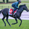 Damien Oliver rides Gold Trip in track work at Moonee Valley.