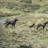 Dark water: how brumbies will destroy everything Canberra was built on