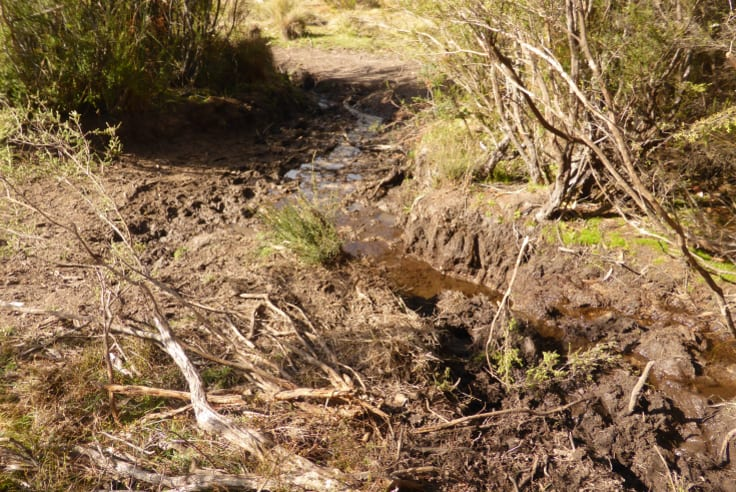 A small creek in northern Kosciuszko National Park damaged by brumbies.