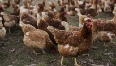 Campaigns by animal welfare activists have seen free-range egg sales rise.