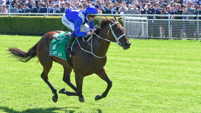 Stunning: Winx romps home to win the Chipping Norton Stakes at Randwick on Saturday.