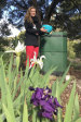 Sculptor Kathy Holowko with her compost bin at home in Blackwood.