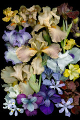 Irises come in a variety of colours, shapes and scents.