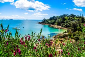 Hekerua Bay on Waiheke Island in New Zealand with sail boats on the water below and pretty purple flowers in the foreground. Taken on a bright summer day SunNov4cover - Ugly but beautiful - Ben Groundwater