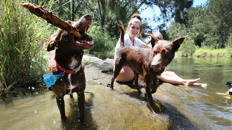 Locals Courtney Marshall and Amy-Lee Pascoe cool off with their kelpies at the Bunya Crossing Reserve, North of Brisbane, earlier in the month.