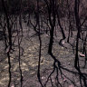 Bushfires may crimp living standards long term as insurance costs hit $2b