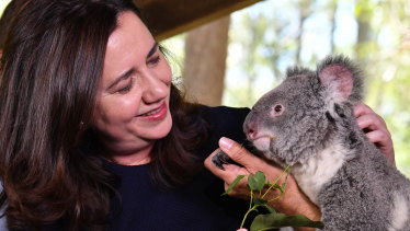 Premier Annastacia Palaszczuk with Nala the Koala at Daisy Hill Koala centre on Saturday.