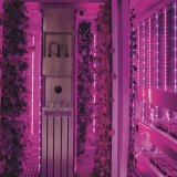 Thehydroponic vertical farm in a shipping container at Cultivar restaurant, Boston.