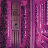 The hydroponic vertical farm in a shipping container at Cultivar restaurant, Boston.