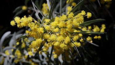 Researchers are examining native plants to unlock further medical potentials.