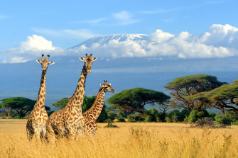 The deadly stampede occurred in Tanzania, not far from Mount Kilimanjaro.