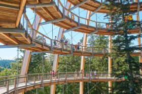 Do look down: 10 of the world's most spectacular treetop walks
