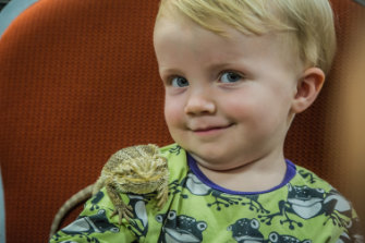 Two-year-old Sebastian Herbert, of Campbell, plays with a bearded dragon at the <i>Snakes Alive!</i> exhibition at the National Botanical Gardens.