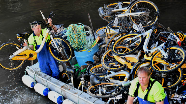 Contractors paid by oBike to collect their bicycles from the Yarra.