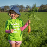 Australian farmers face biggest carrot oversupply in 25 years