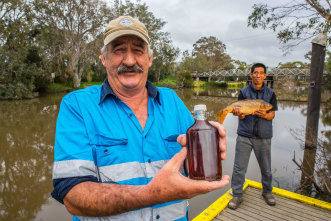 Peter Ingram (L) and Don Enriquez (R) fish the waterways of Gippsland and turn carp into fish sauce.