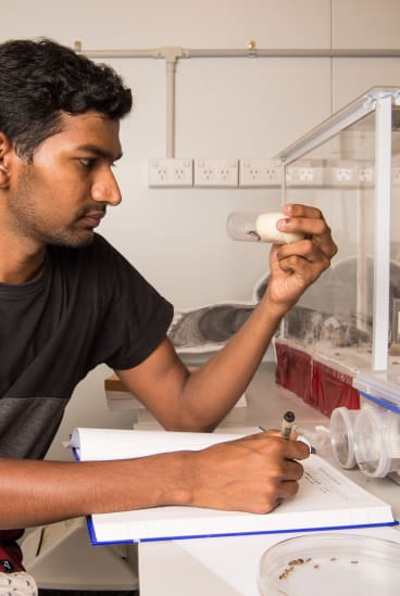 """""""None of them knows where the food is,"""" says Palavalli-Nettimi, pictured in his lab at Macquarie University. """"They just randomly go and if they find some, they lay the chemical trail back to the nest."""""""