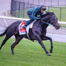 Gold Trip wasn't passed fit for the Cox Plate, but he will now head to Sydney.