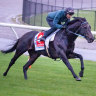 Two Cox Plate runners fail vet test on eve of race