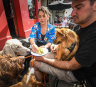 Cafes and pubs dig deep for that bow wow factor (plus a great self-guided pup pub crawl)
