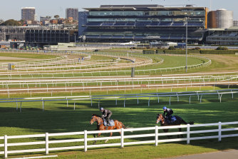 Tommy Berry gets a feel of Mo'unga, which tracks Zaaki in this track gallop at Randwick last Friday.