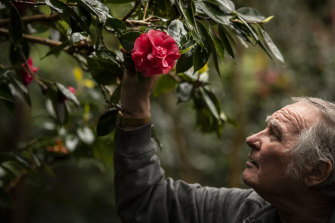 Jim Powell is a member of the Camellia Ark. Its members are working with the Royal Botanic Gardens Trust to save camellias, like the camellia japonica 'Otahuhu Beauty' (pictured),  that came to Australia with Macarthur.